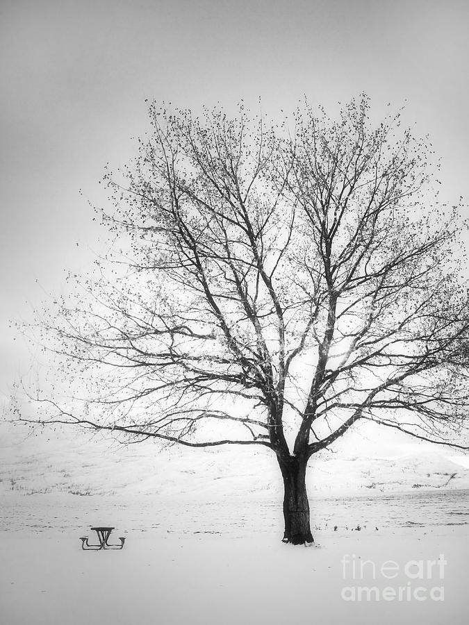 Tree Photograph - A Pale Winter by Tara Turner