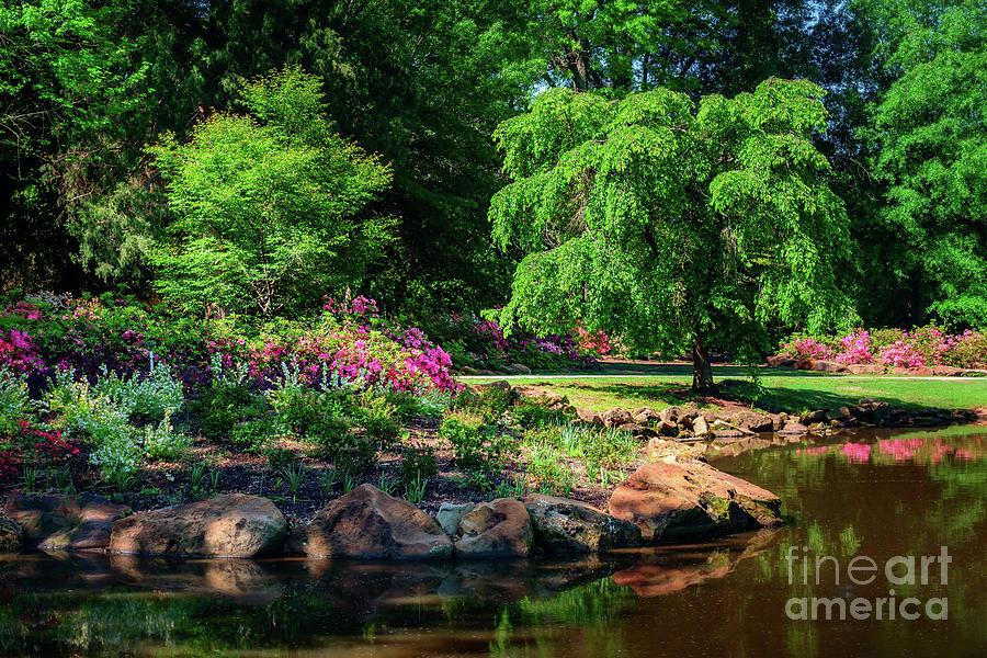 Tamyra Photograph - A Peaceful Feeling At The Azalea Pond by Tamyra Ayles