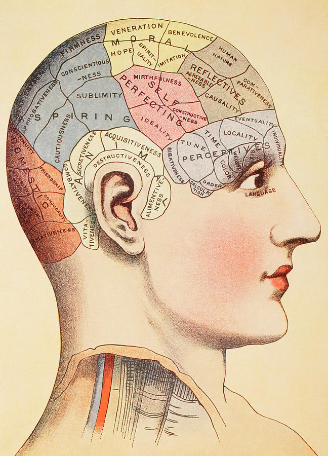 A Phrenological Map Of The Human Brain Painting By English