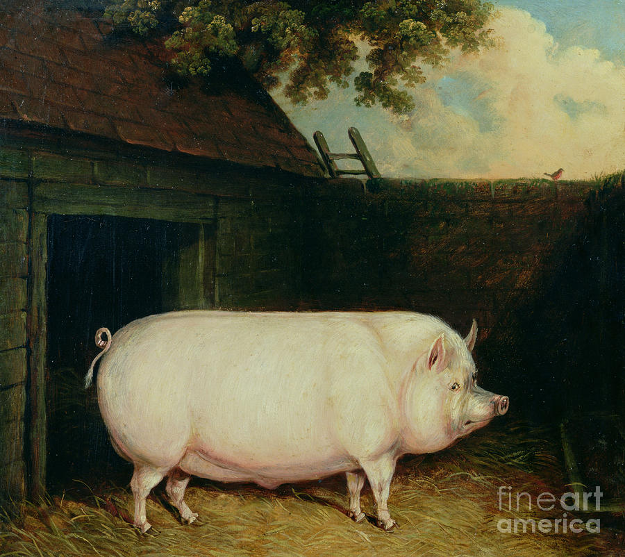a pig in its sty painting by e m fox