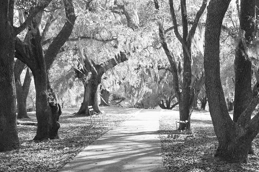 Black And White Photograph - A Place For Contemplation Ir by Suzanne Gaff