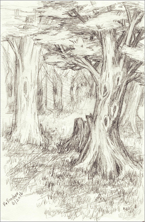 Trees Drawing - A Place To Rest In The Trees by Ruth Renshaw