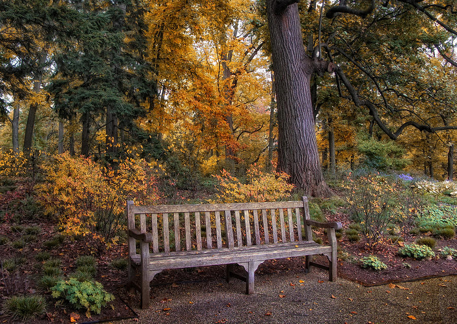 Autumn Photograph - A Place To Rest by Jessica Jenney