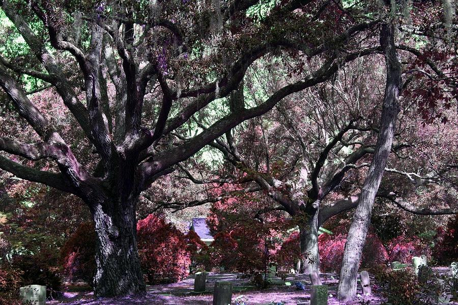 Tree Photograph - A Place To Rest by Jill Tennison