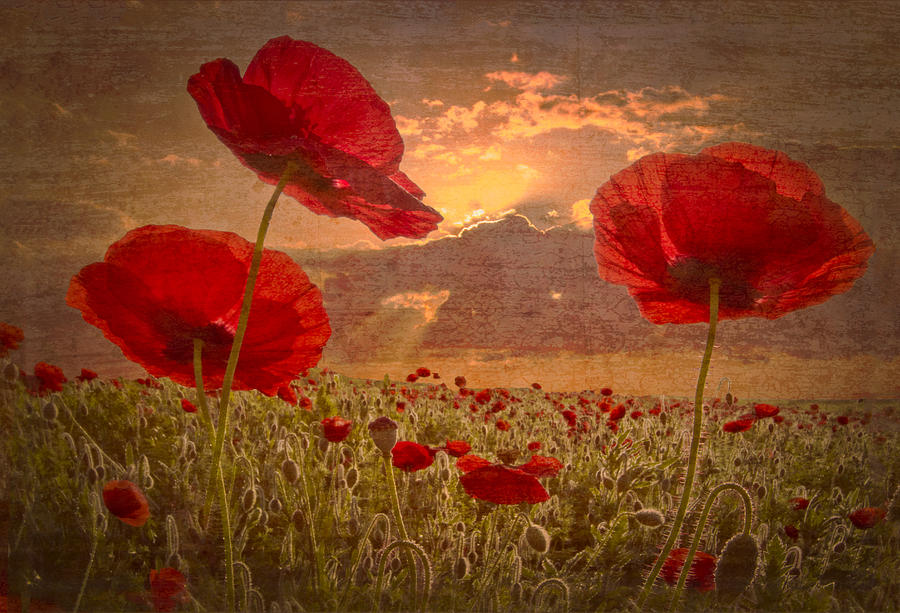 Appalachia Photograph - A Poppy Kind Of Morning by Debra and Dave Vanderlaan