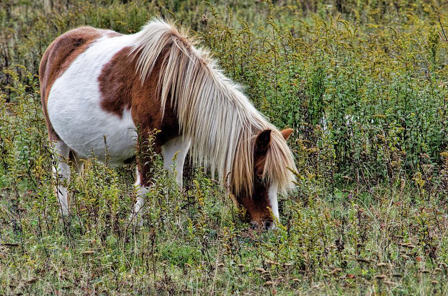 A Pretty Painted Pony by Jennifer Stockman