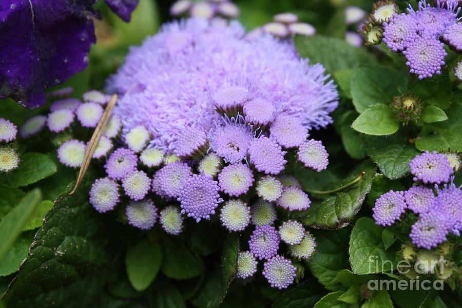 A Purple Morning Photograph