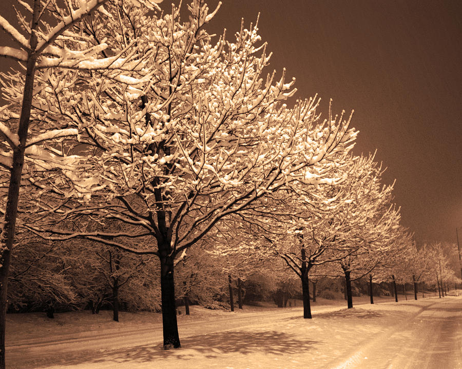Snow Photograph - A Quiet Snowy Night by Jackie Reitsma