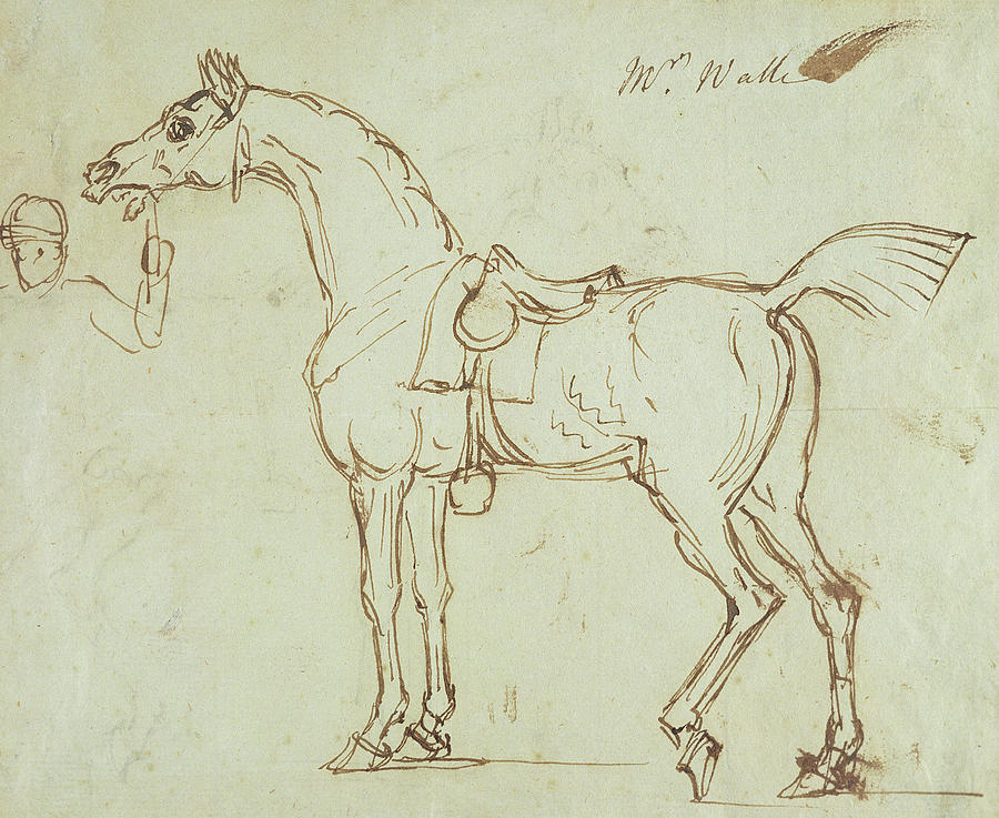 Horse Drawing - A Racehorse, Bridled And Saddled  by James Seymour