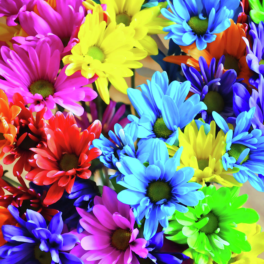 Daisy Photograph - A Rainbow Song by JAMART Photography