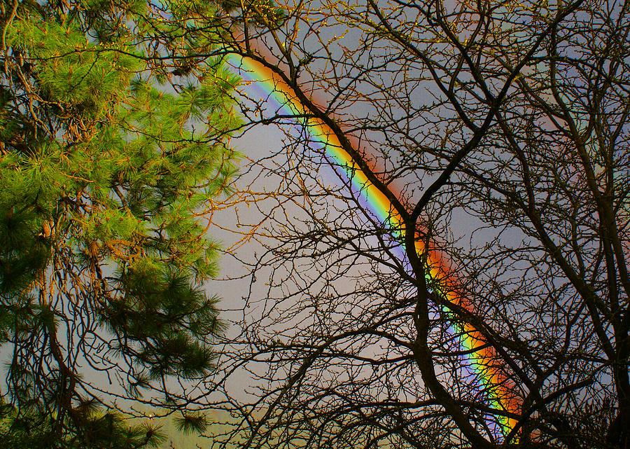 Rainbow Photograph - A Rainbow Tree by Ben Upham III