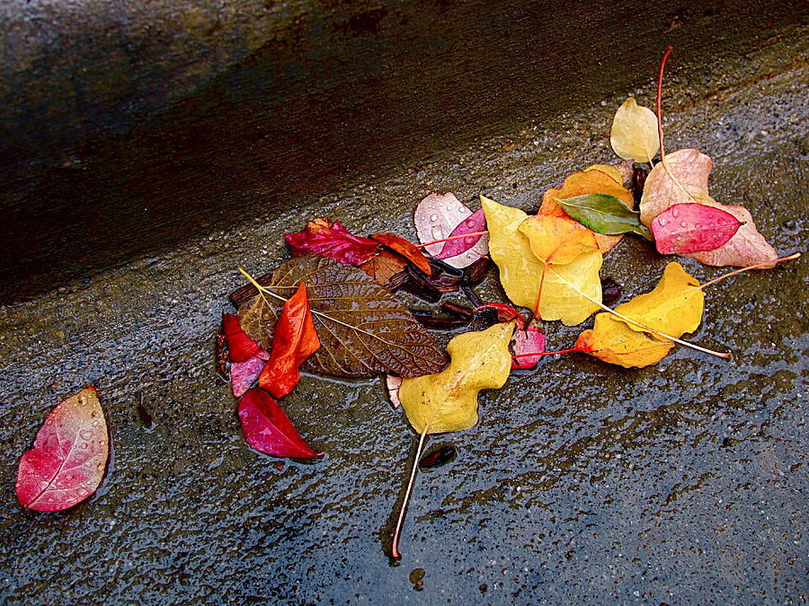 Autumn Photograph - A Rainy Autumn Day In The City by Rona Black