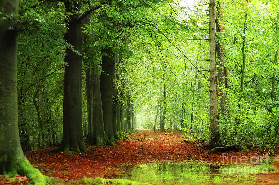 A Rainy Day In The Forest Photograph