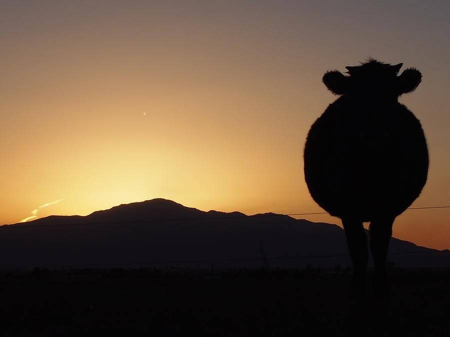 Ranch Photograph - A Ranchers Sunset by Kayla Hall