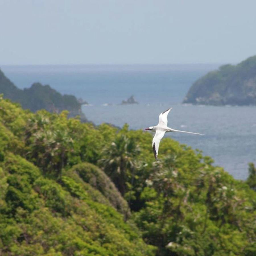 Tropicbird Photograph - A Red-billed Tropicbird (phaethon by John Edwards