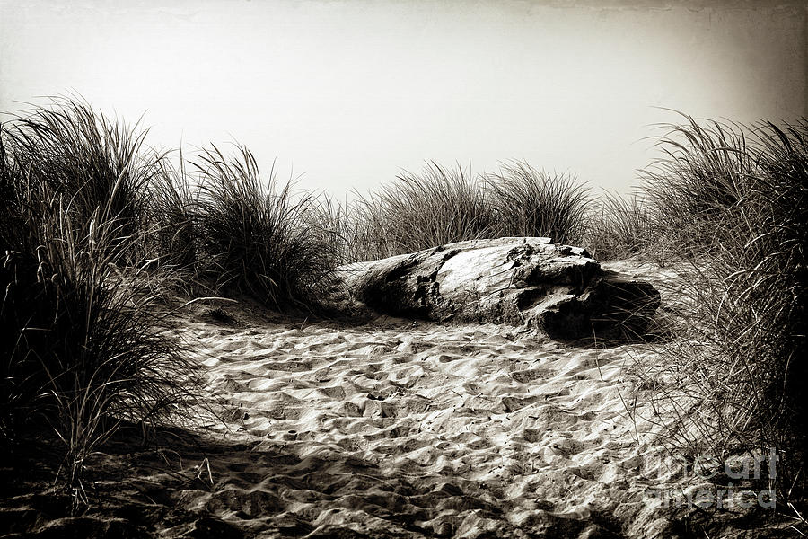 A Resting Place on the Dune by Lincoln Rogers