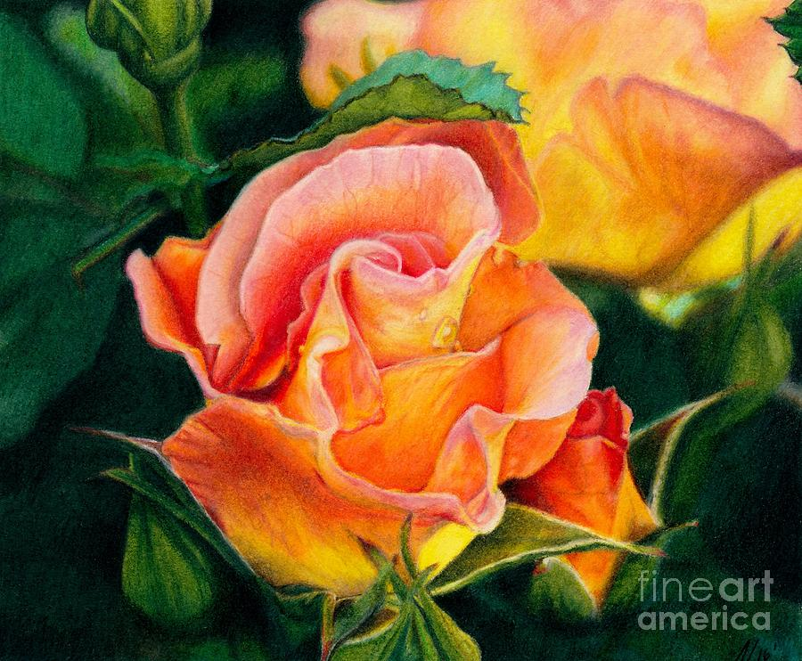 Coloured Pencil Painting - A Rose For Nan by Amanda Jensen