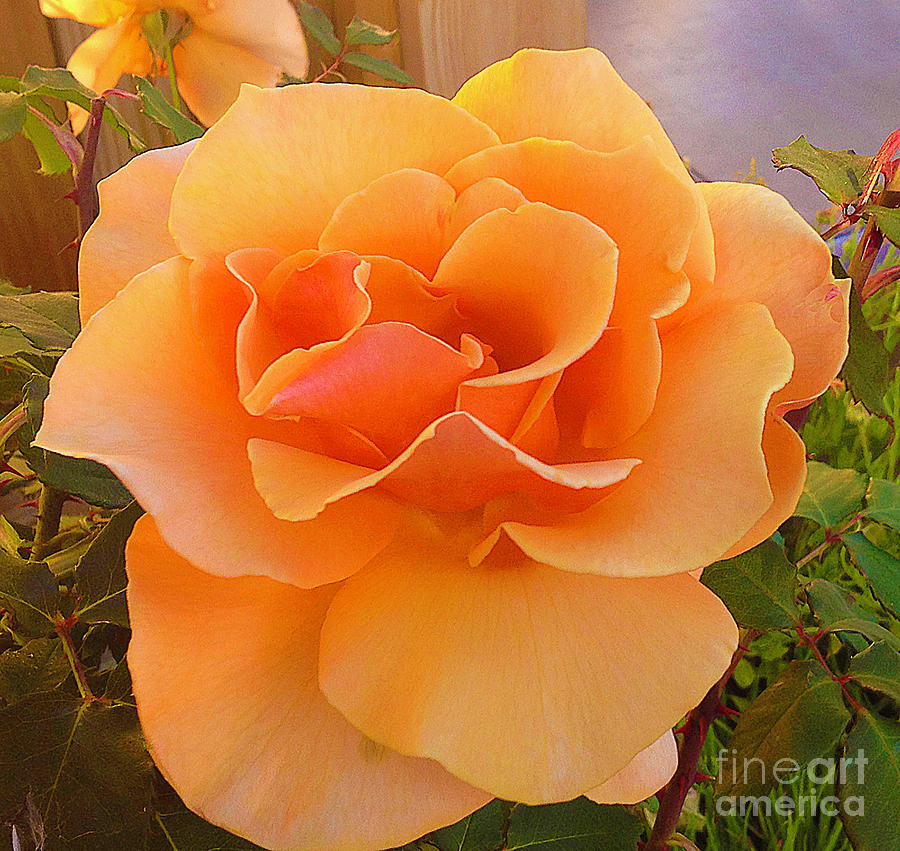 A Rose Is A Rose by Joyce Creswell