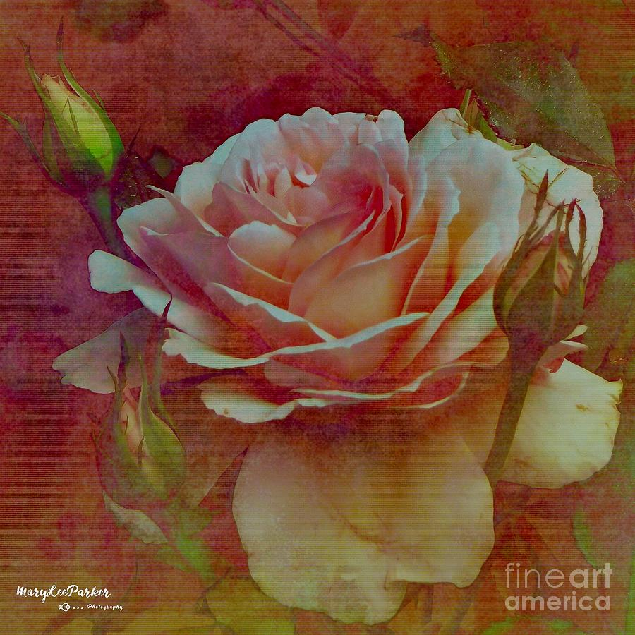 A Rose  by MaryLee Parker