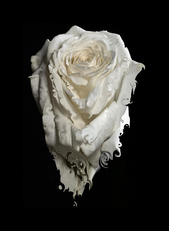 Rose Photograph - A Rose Melted Down In A Moment by Cristina Tamiso