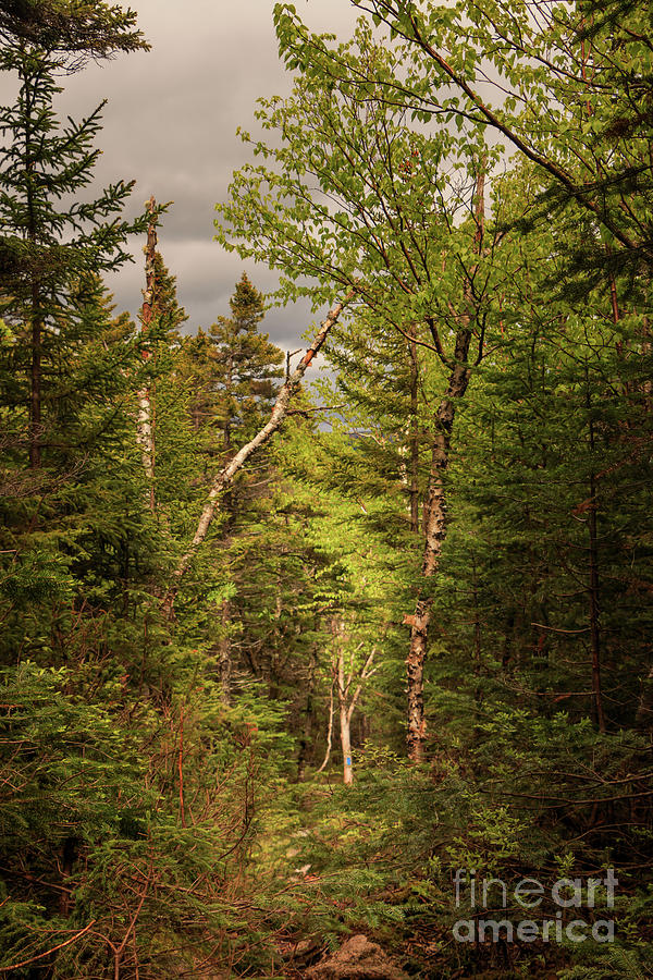 A Scene From Baxter State Park Photograph