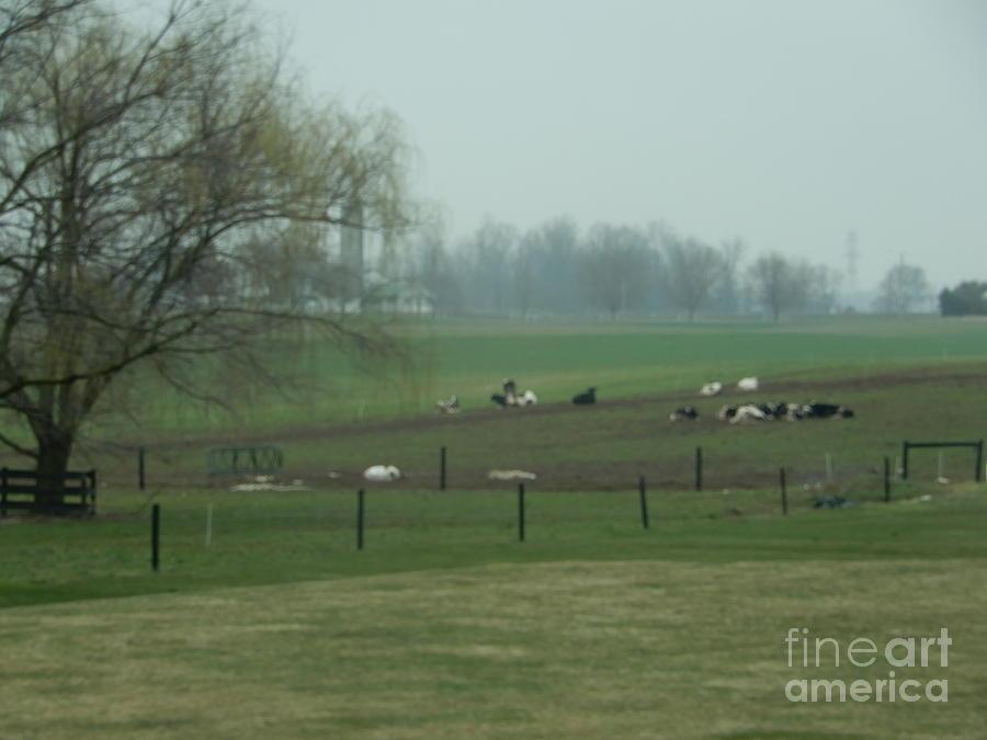 Amish Photograph - A Serene Vista by Christine Clark