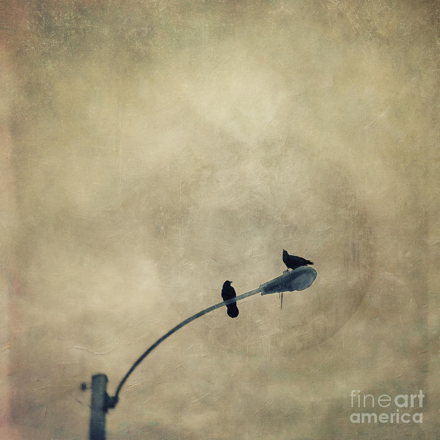 Raven Photograph - A Short Moment by Priska Wettstein