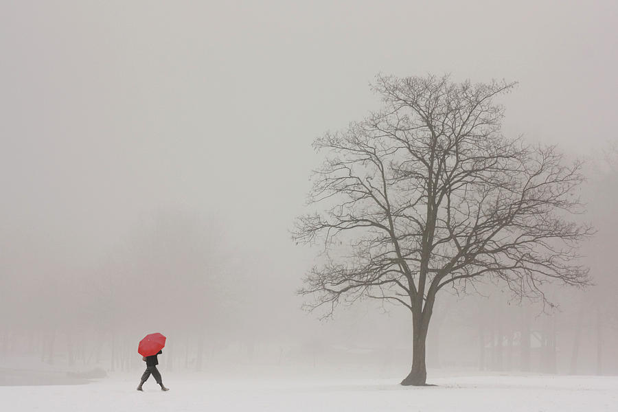 Snowy Winter Photograph - A Shortcut Through The Snow by Tom York Images