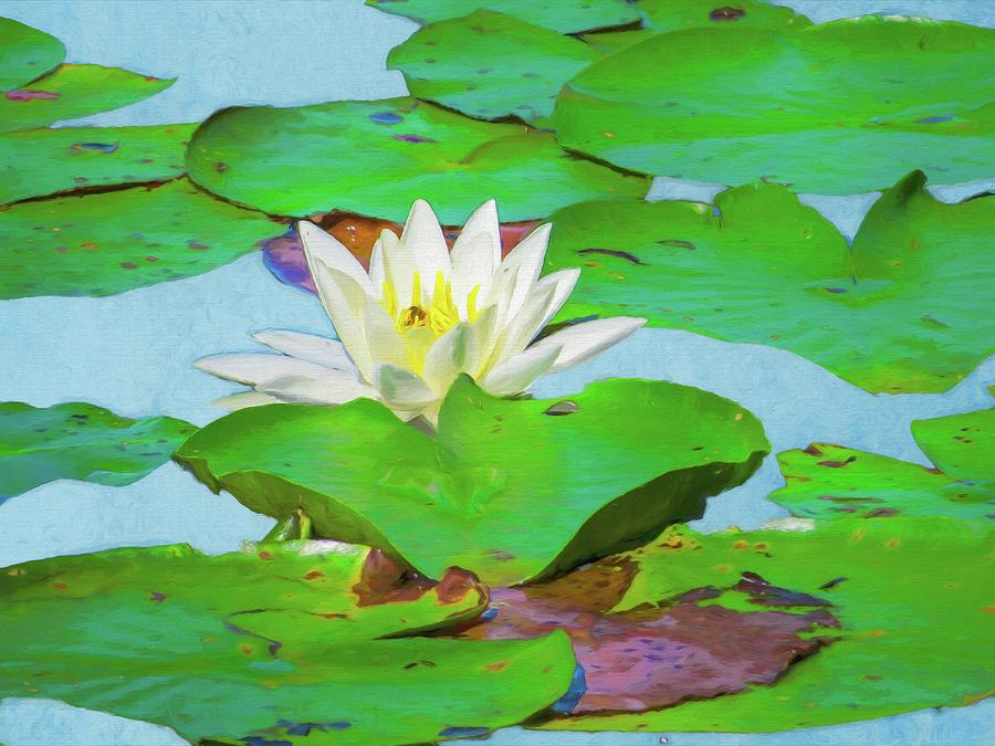 Summer Digital Art - A Single Water Lily Blossom by Rusty R Smith