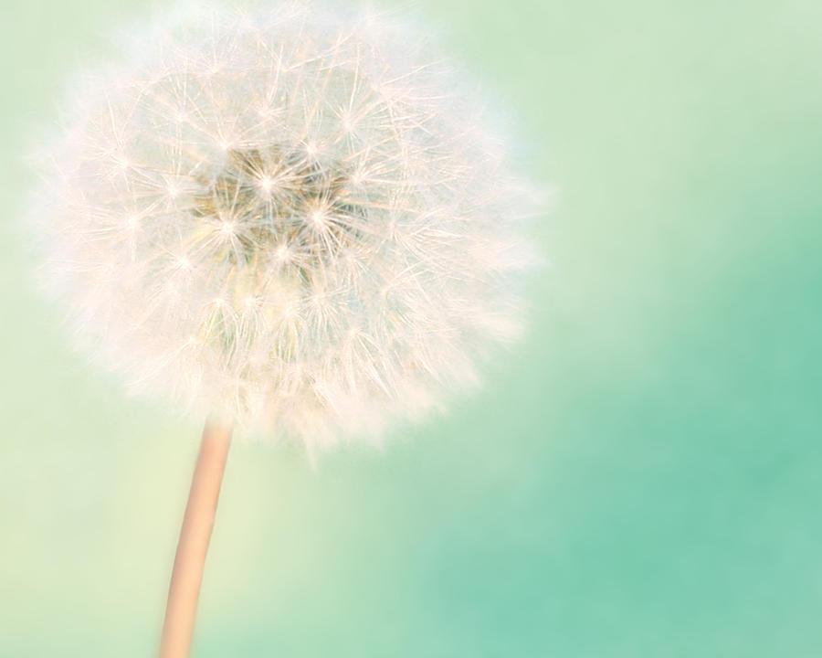 Dandelion Photograph - A Single Wish II by Amy Tyler