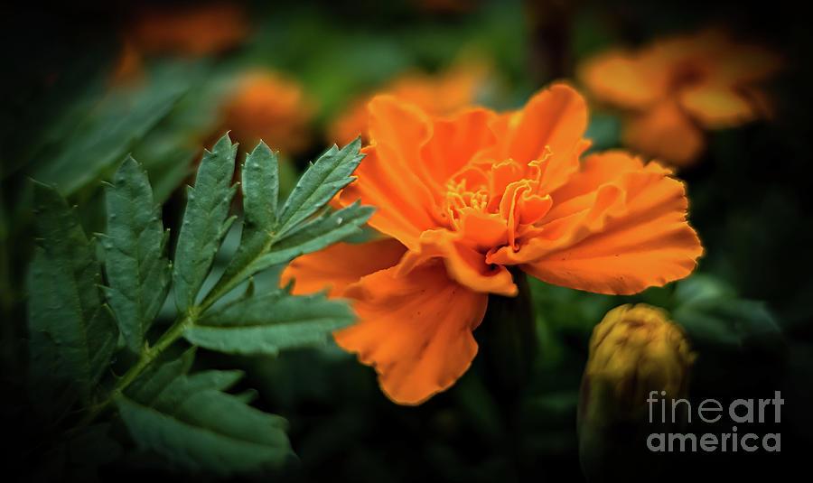 A Slice of Orange by JB Thomas