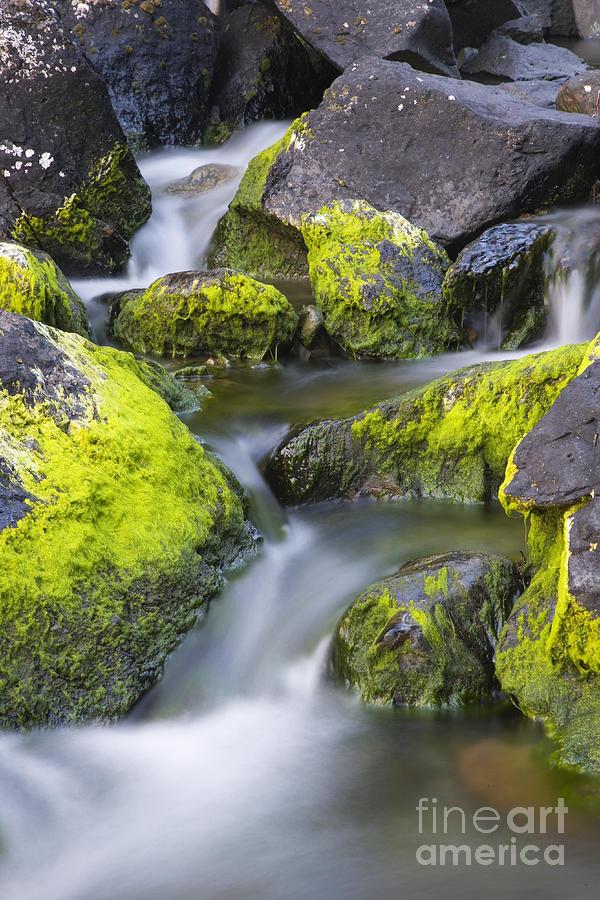 Stream Photograph - A Small Stream by Tim Grams