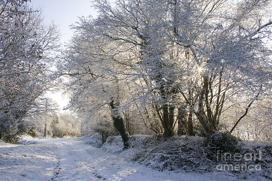 Winter Photograph - A Sparkling Winter Day by Sophie De Roumanie