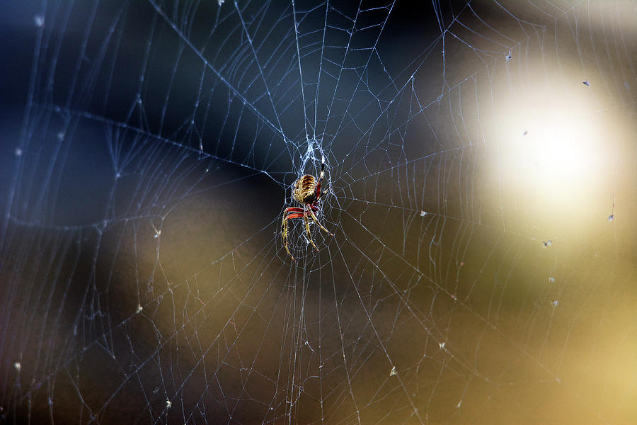 Spider Photograph - A Spider And Her Web by TJ Baccari