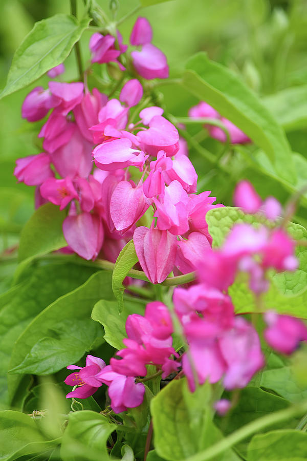 Pink Flowers Photograph - A Splash Of Pink by William Tasker
