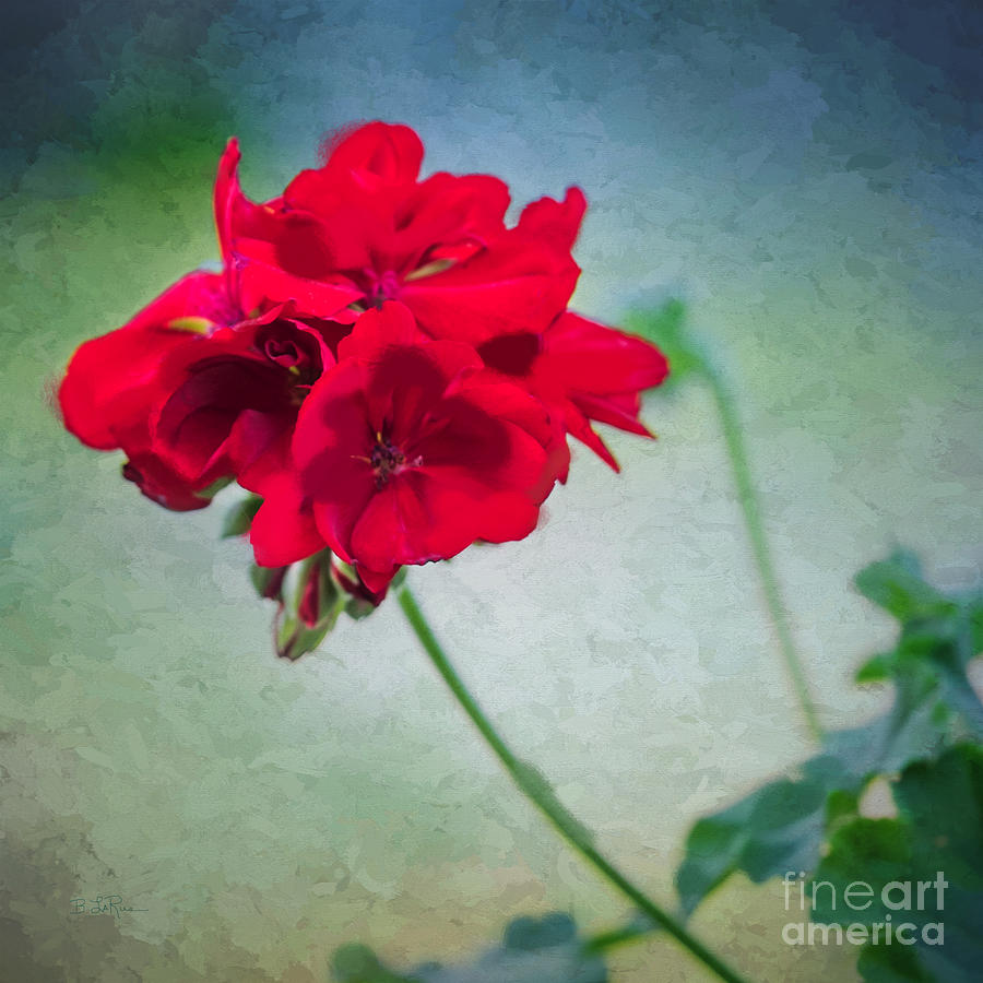 A Splash Of Red Photograph