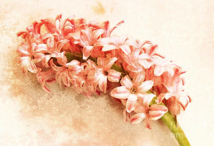 A Springtime Impression Photograph