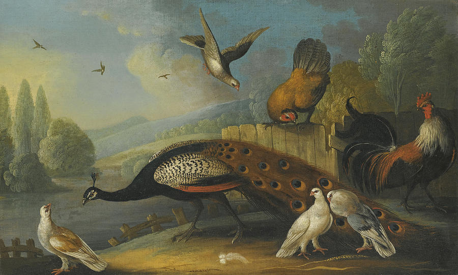 Canvas Prints Painting - A Still Life With A Peacock, Pigeons And Chickens In A River Landscape by Marmaduke Cradock