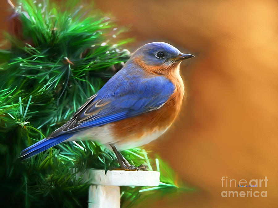Bluebird Photograph - A Still Moment by Tina LeCour