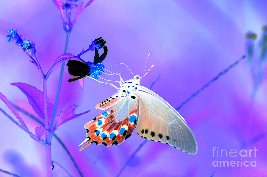 Butterflies Photograph - A Strange Butterfly Dream by Kim Pate