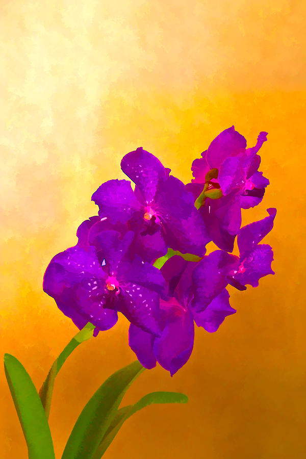 Flower Mixed Media - A Study In Orchid by Ches Black