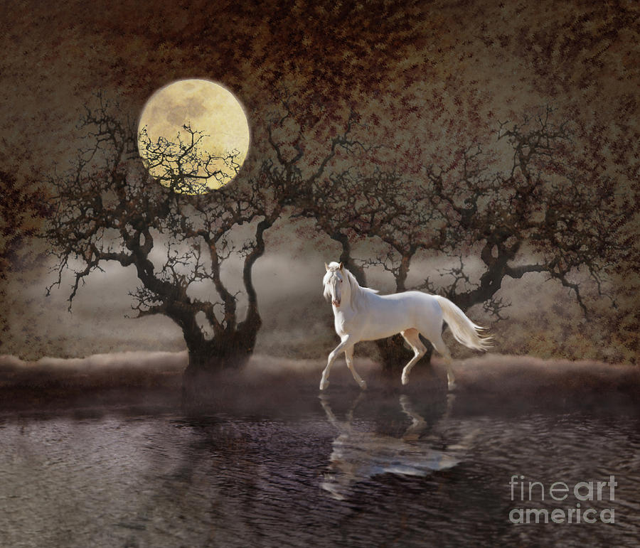 White Horses Photograph - A Summer Nights Dream by Melinda Hughes-Berland