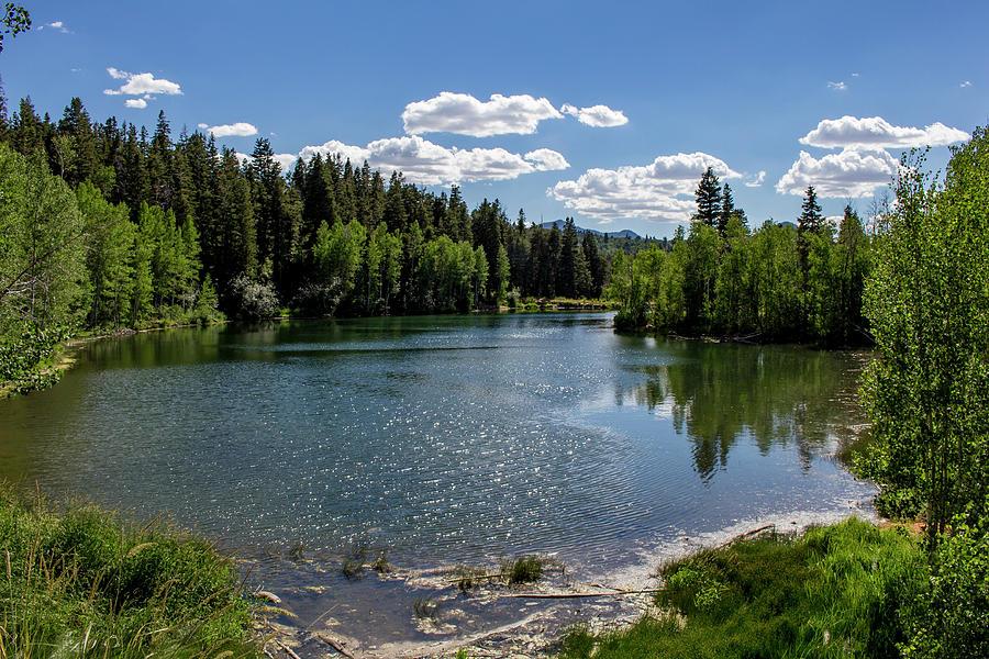 A Sunny Day At Mcclellan Lake Photograph