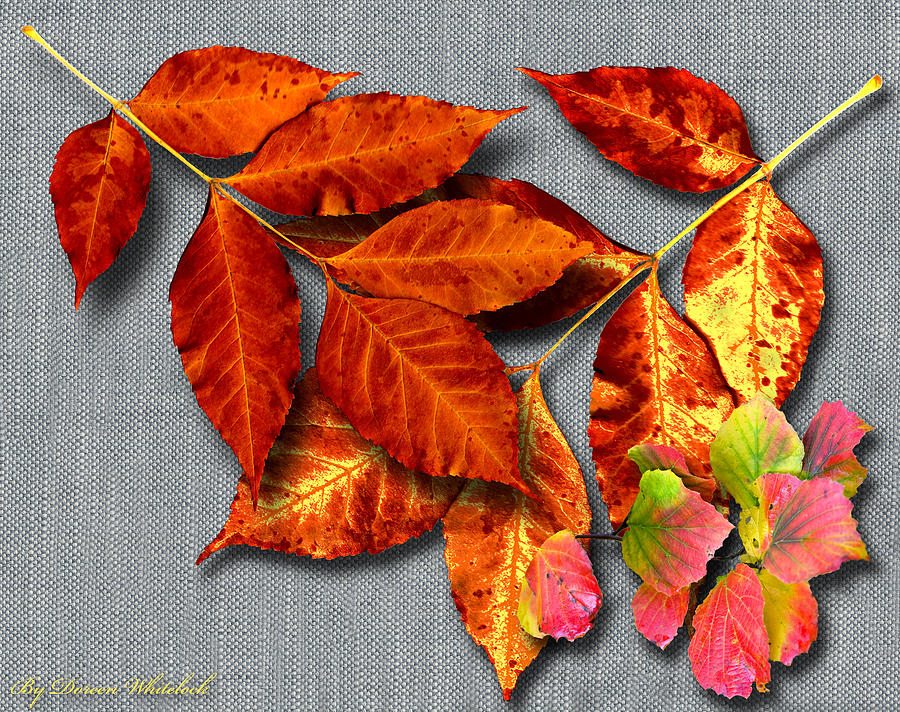 Fall Colors Photograph - A Taste Of Fall II by Doreen Whitelock