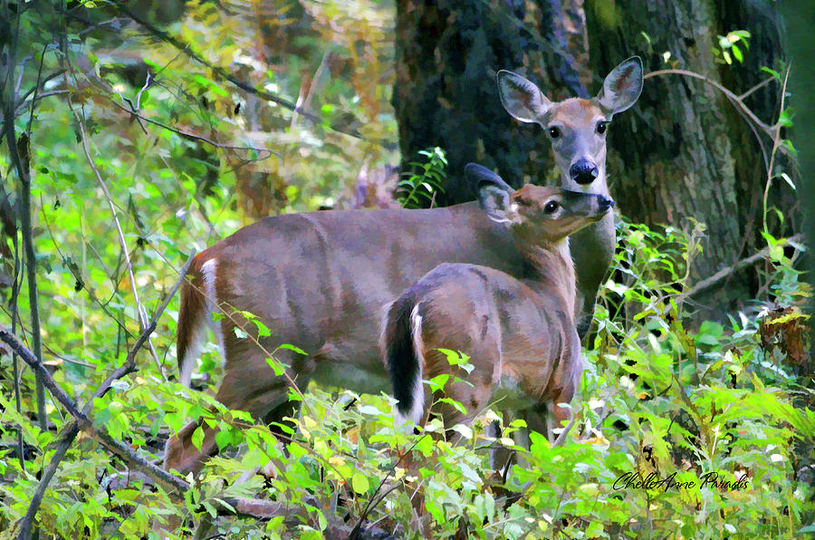 Deer Photograph - A Tender Moment by ChelleAnne Paradis