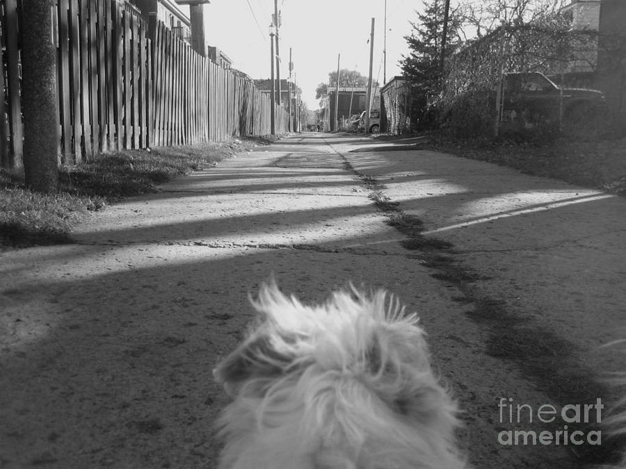 Terriers Photograph - A Terriers Perspective by Reb Frost