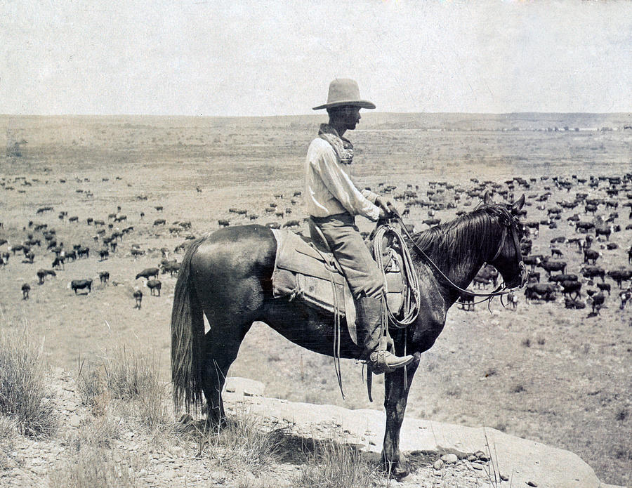 1900s Photograph - A Texas Cowboy On Horseback On A Knoll by Everett