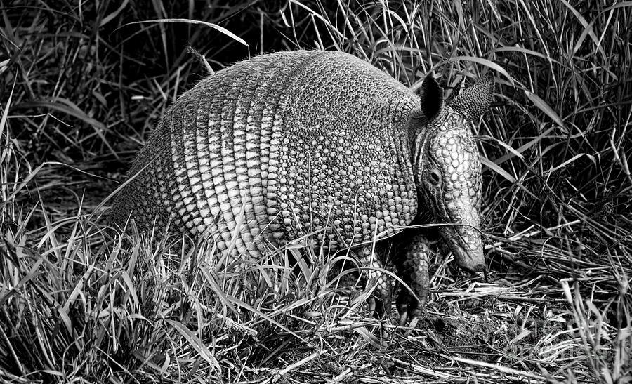 Texas Photograph - A Texas Critter by Gary Richards