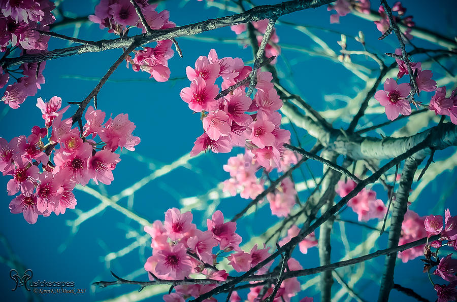 A Time to Blossom by Karen Musick