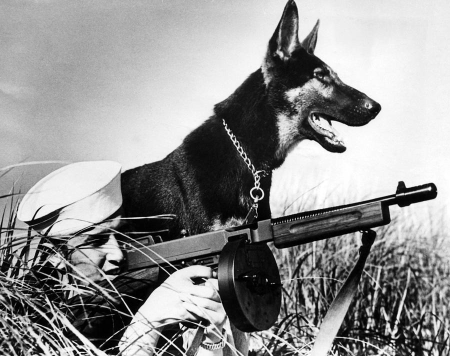1940s Candid Photograph - A Trained German Shepherd Sitting Watch by Everett